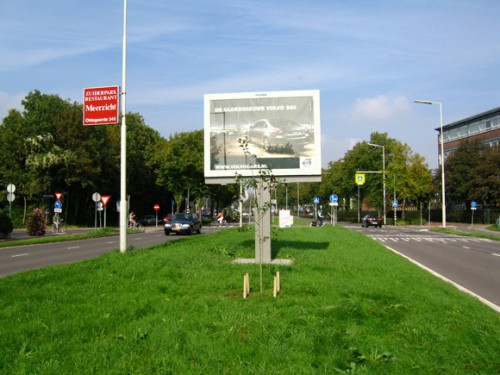 tree-in-front-of-billboard-03